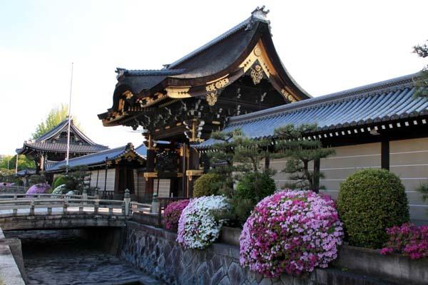 西本願寺 ツツジ終盤_e0048413_20480443.jpg