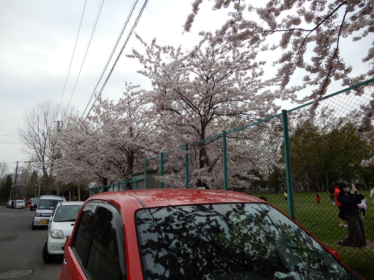春真っ盛り_c0025115_22245559.jpg