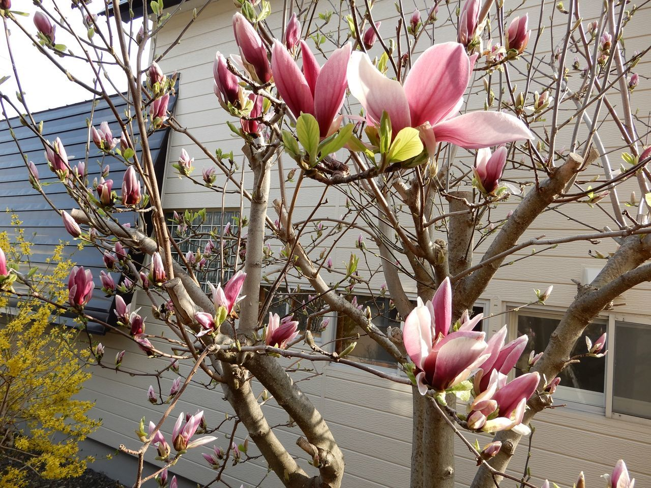 春真っ盛り_c0025115_22280333.jpg