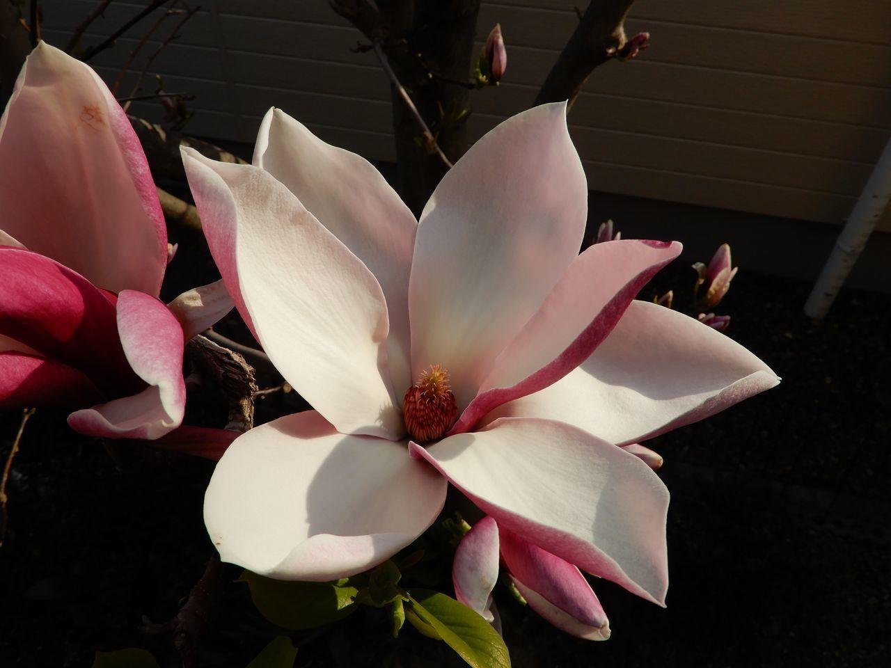 春真っ盛り_c0025115_22280703.jpg