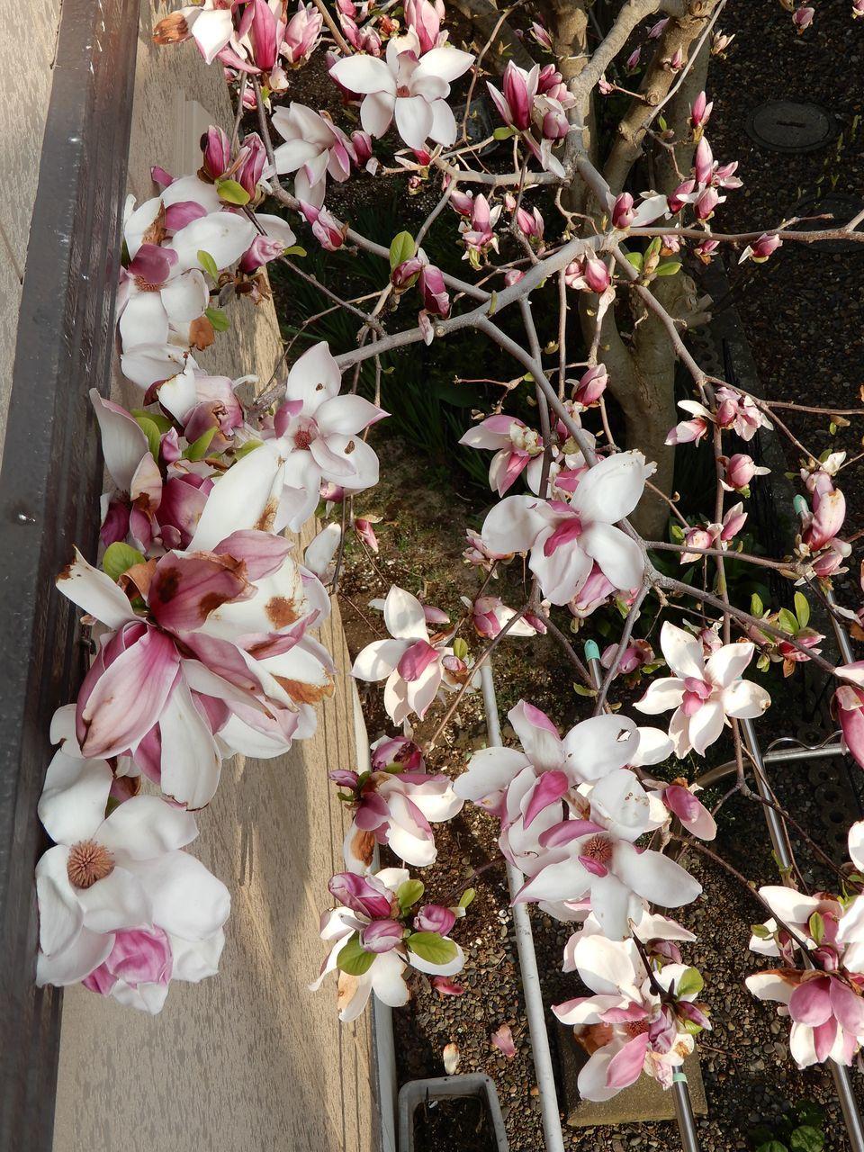 春真っ盛り_c0025115_22282106.jpg