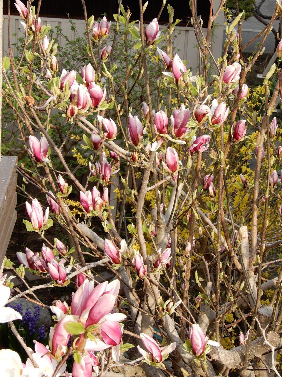 春真っ盛り_c0025115_22282676.jpg