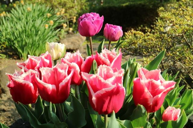 まだまだチューリップと5月の庭~♪_e0397815_00430860.jpg