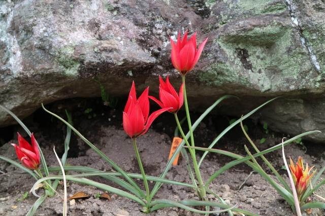 まだまだチューリップと5月の庭~♪_e0397815_00431942.jpg