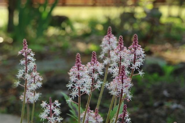 まだまだチューリップと5月の庭~♪_e0397815_00495456.jpg