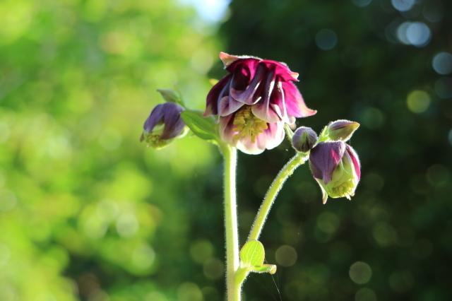 まだまだチューリップと5月の庭~♪_e0397815_00524132.jpg