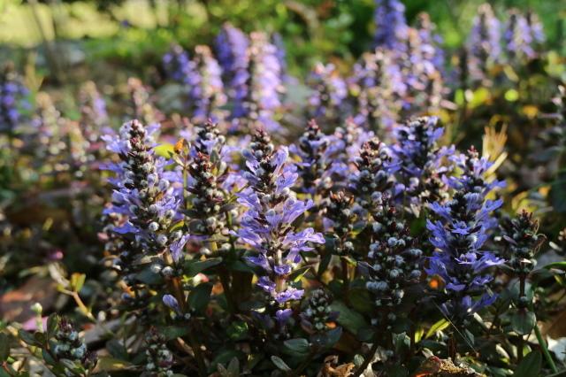 まだまだチューリップと5月の庭~♪_e0397815_00551266.jpg