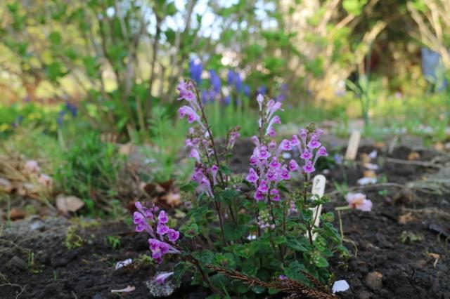まだまだチューリップと5月の庭~♪_e0397815_00553642.jpg
