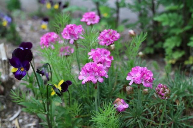 5月のカレンダーと庭改修~♪_e0397815_21523101.jpg