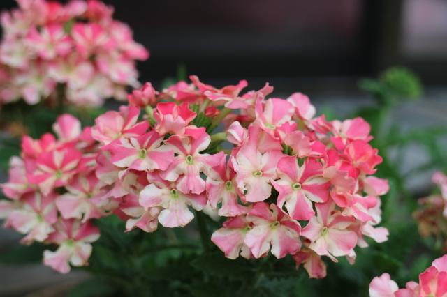 5月のカレンダーと庭改修~♪_e0397815_21523707.jpg