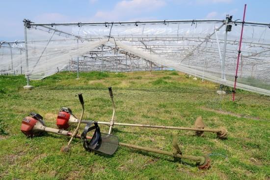 草刈り、ぶどう達の様子_d0336530_15111637.jpg