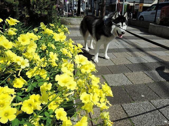 散歩屋日誌【41】_c0062832_15494589.jpg
