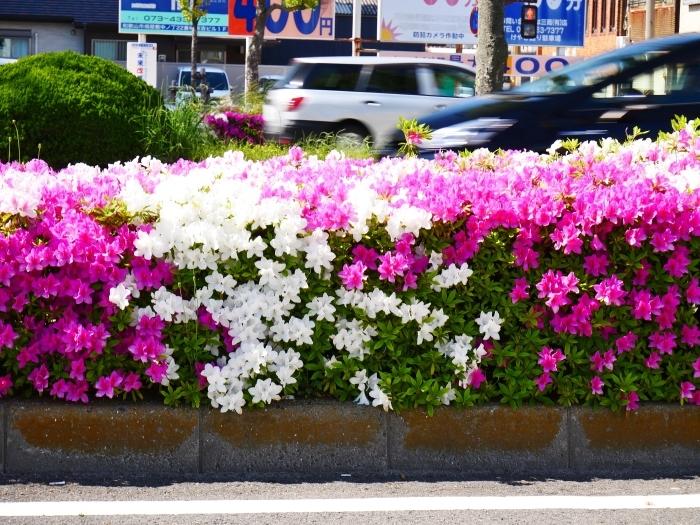 美しい新緑とつつじのけやき大通り  2020-05-06 00:00   _b0093754_22244364.jpg