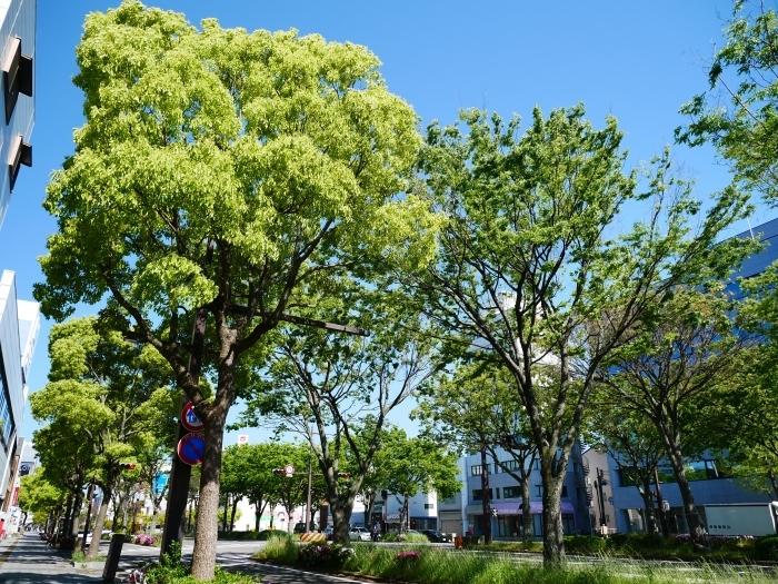 美しい新緑とつつじのけやき大通り  2020-05-06 00:00   _b0093754_22260528.jpg