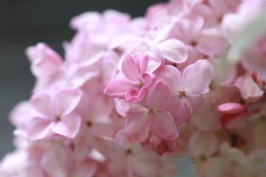 五弁の花びら_f0282759_14243253.jpg
