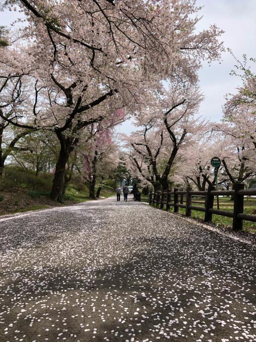 春本番!_b0093660_21095720.jpg