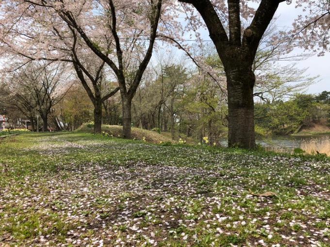 春本番!_b0093660_21100369.jpg