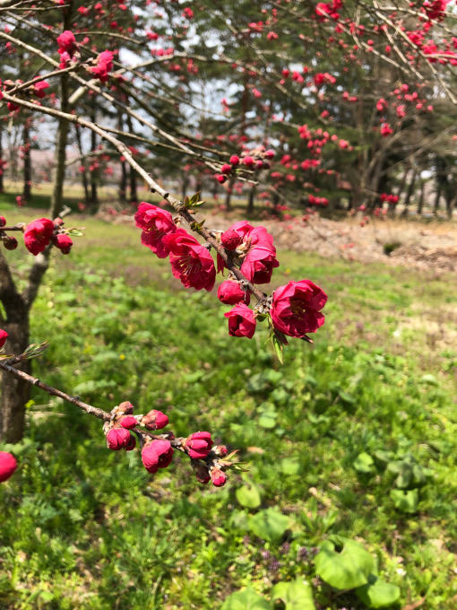春本番!_b0093660_21101548.jpg