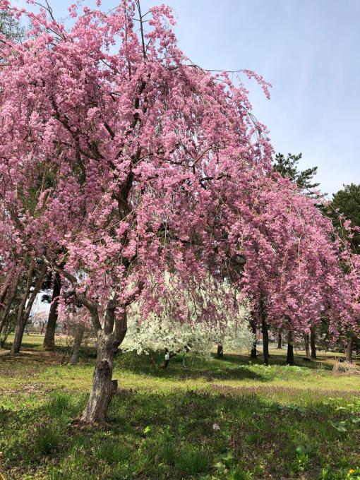 春本番!_b0093660_21102295.jpg