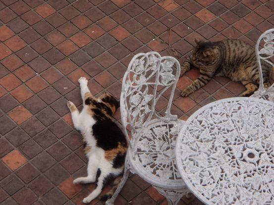 猫たちと庭で山菜採り_f0064906_18031808.jpg