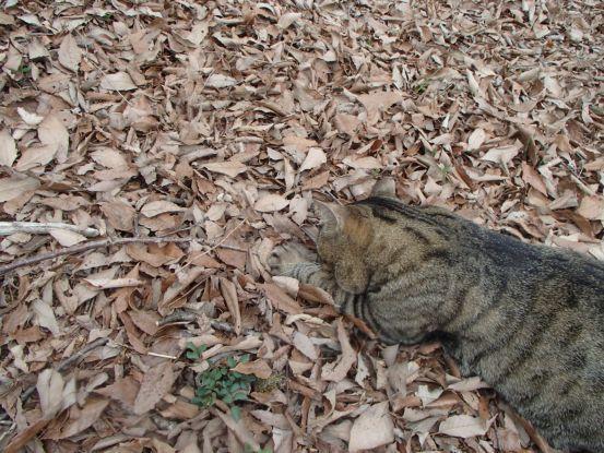 猫たちと庭で山菜採り_f0064906_18033613.jpg