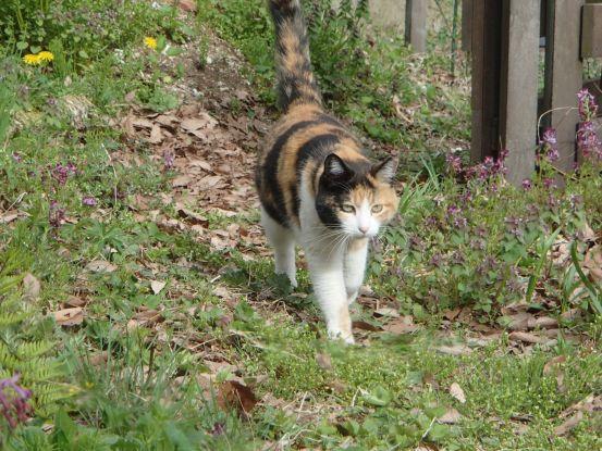 猫たちと庭で山菜採り_f0064906_18034863.jpg