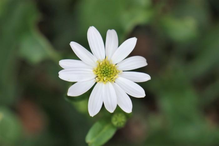 庭に咲く花_d0150720_06340411.jpg