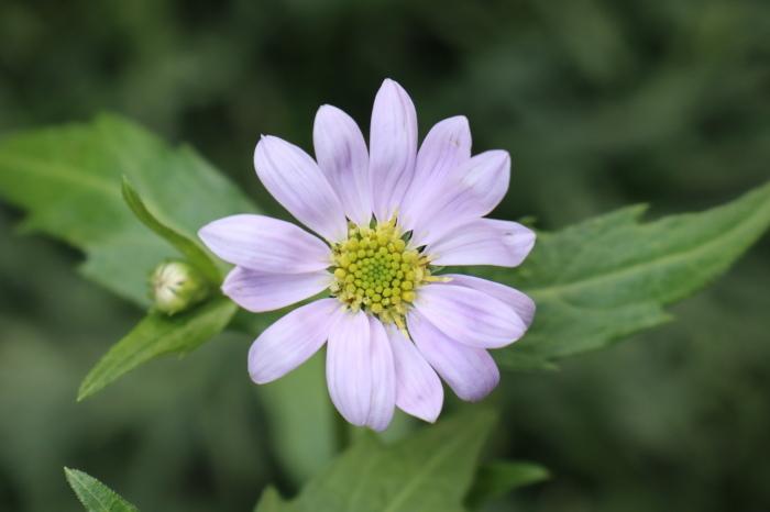 庭に咲く花_d0150720_06343435.jpg