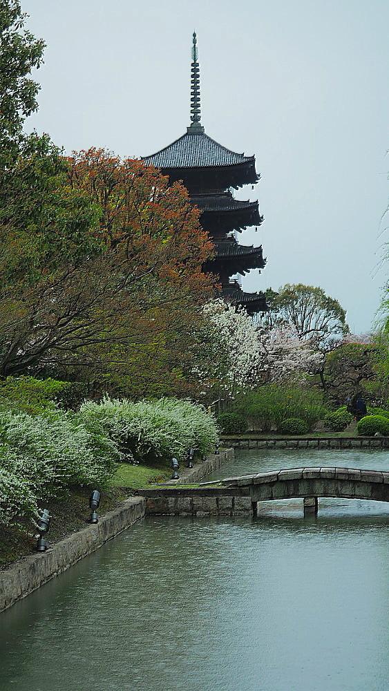 東寺 曇天の桜と五重塔と_a0287533_10145473.jpg