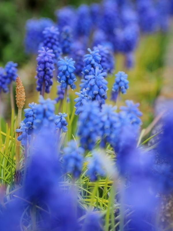 春の花 3_d0286954_05232043.jpg
