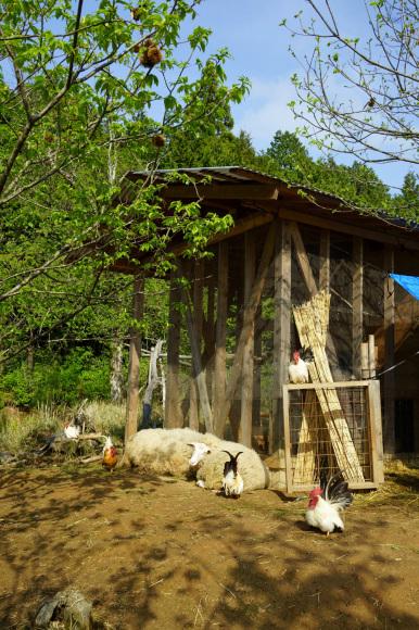 春、羊_d0231263_22074360.jpg