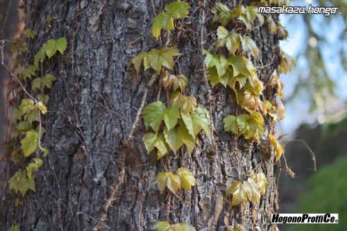 【おっ散歩カメラ放浪記:第3回】広瀬川の自然とプロビア_b0008475_10222749.jpg