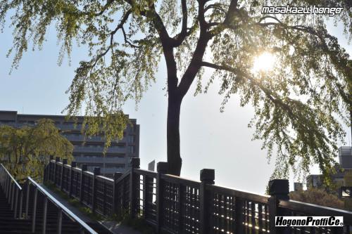 【おっ散歩カメラ放浪記:第3回】広瀬川の自然とプロビア_b0008475_10223324.jpg