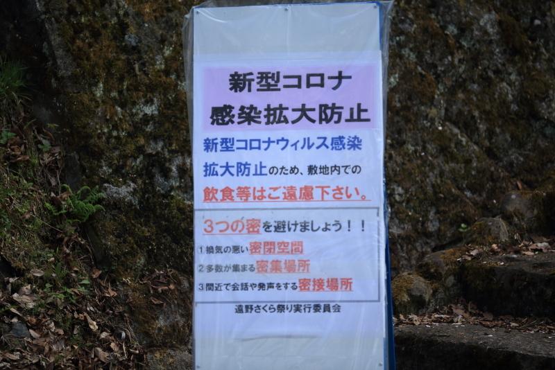 鍋倉公園の桜(2020.05.04)_f0075075_16513527.jpg