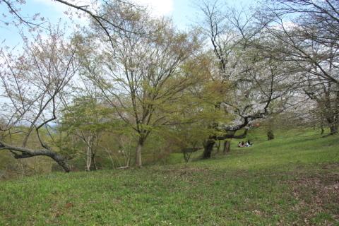 鍋倉公園の桜(2020.05.04)_f0075075_18064603.jpg