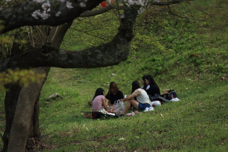 鍋倉公園の桜(2020.05.04)_f0075075_18084532.jpg