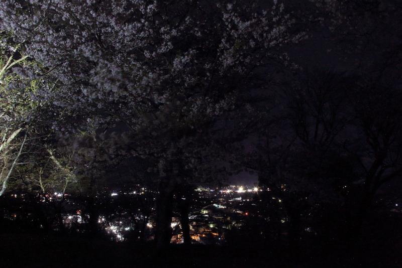 鍋倉山の桜、本丸跡のライトアップ_f0075075_22252074.jpg