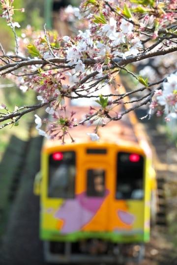 樽見鉄道の桜_f0266284_23594344.jpeg