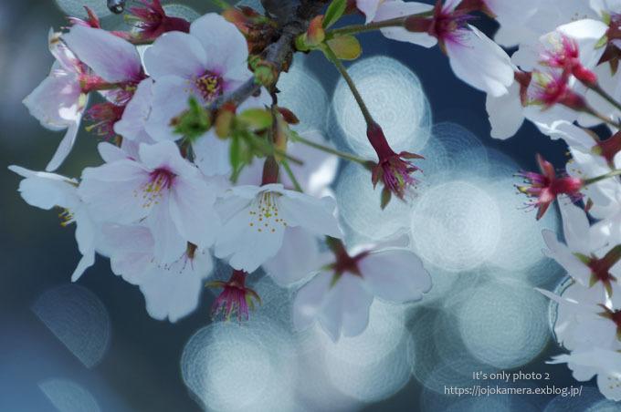 きらきらと桜_b0391986_18412462.jpg