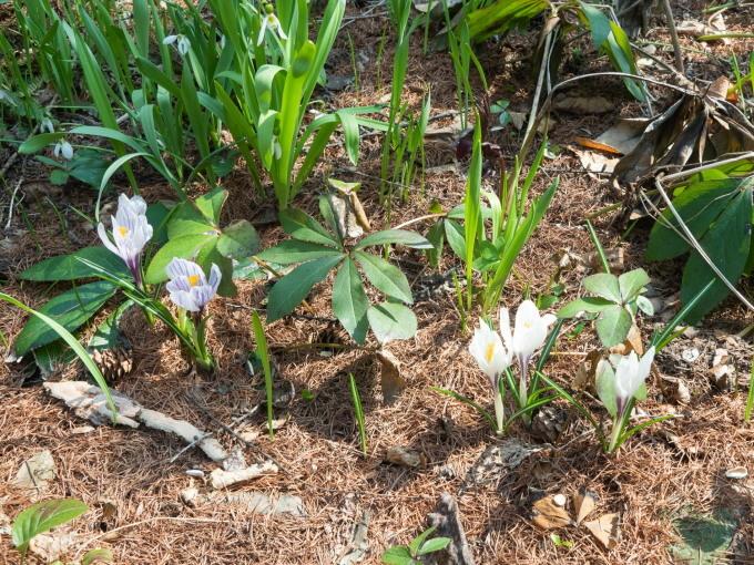 5月ですので例年通りカタクリの花も咲き始めましたが・・_f0276498_22071868.jpg
