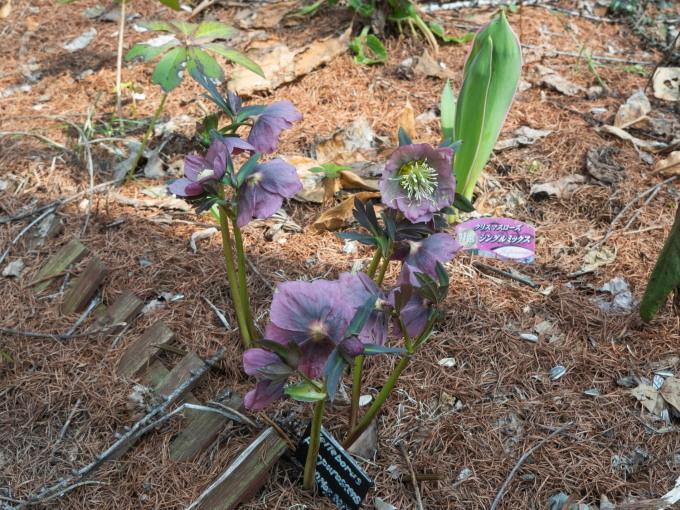 5月ですので例年通りカタクリの花も咲き始めましたが・・_f0276498_22073423.jpg