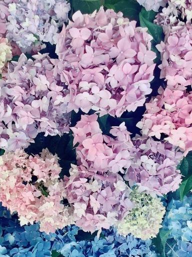 Pinkっていくつになっても好き♡_b0210699_00263015.jpeg