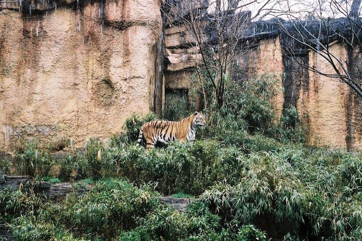 3/ 14 多摩動物公園 3枚_b0016600_18223998.jpg