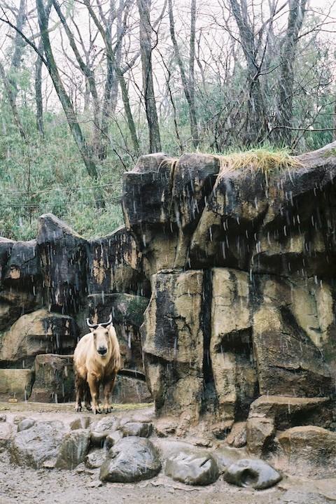 3/ 14 多摩動物公園 3枚_b0016600_18224294.jpg