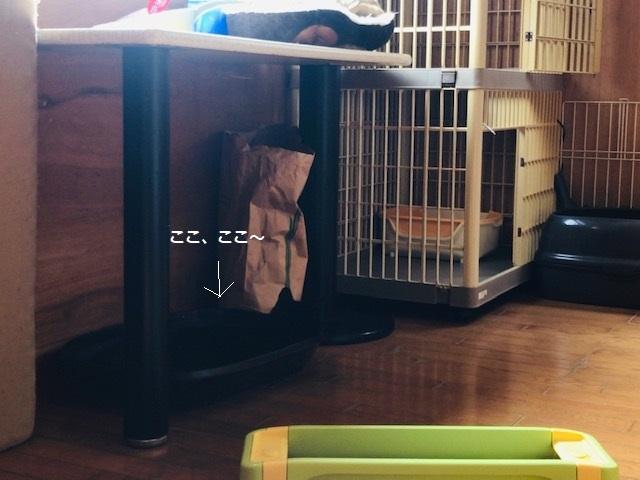 クロネコ楽々丸くんのご紹介です_f0242002_22173522.jpg