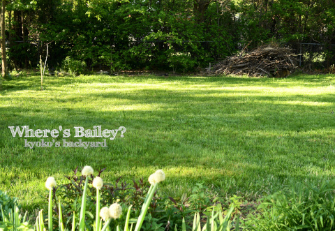 Baileyを探せ!(2020年、春)_b0253205_22445892.jpg