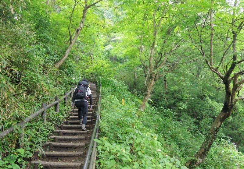 膝リハビリノ高尾山/稲荷山c_a0165316_09082892.jpg