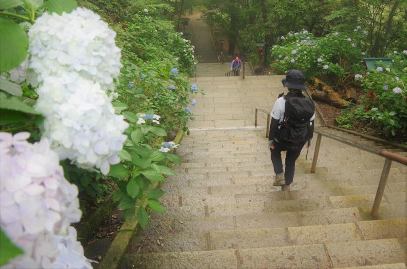 膝リハビリノ高尾山/稲荷山c_a0165316_09090980.jpg