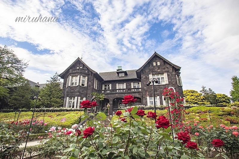 旧古河庭園の薔薇風景。_c0037519_21345808.jpg