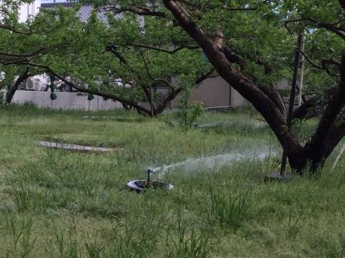 灌水をする_f0325525_15081395.jpeg